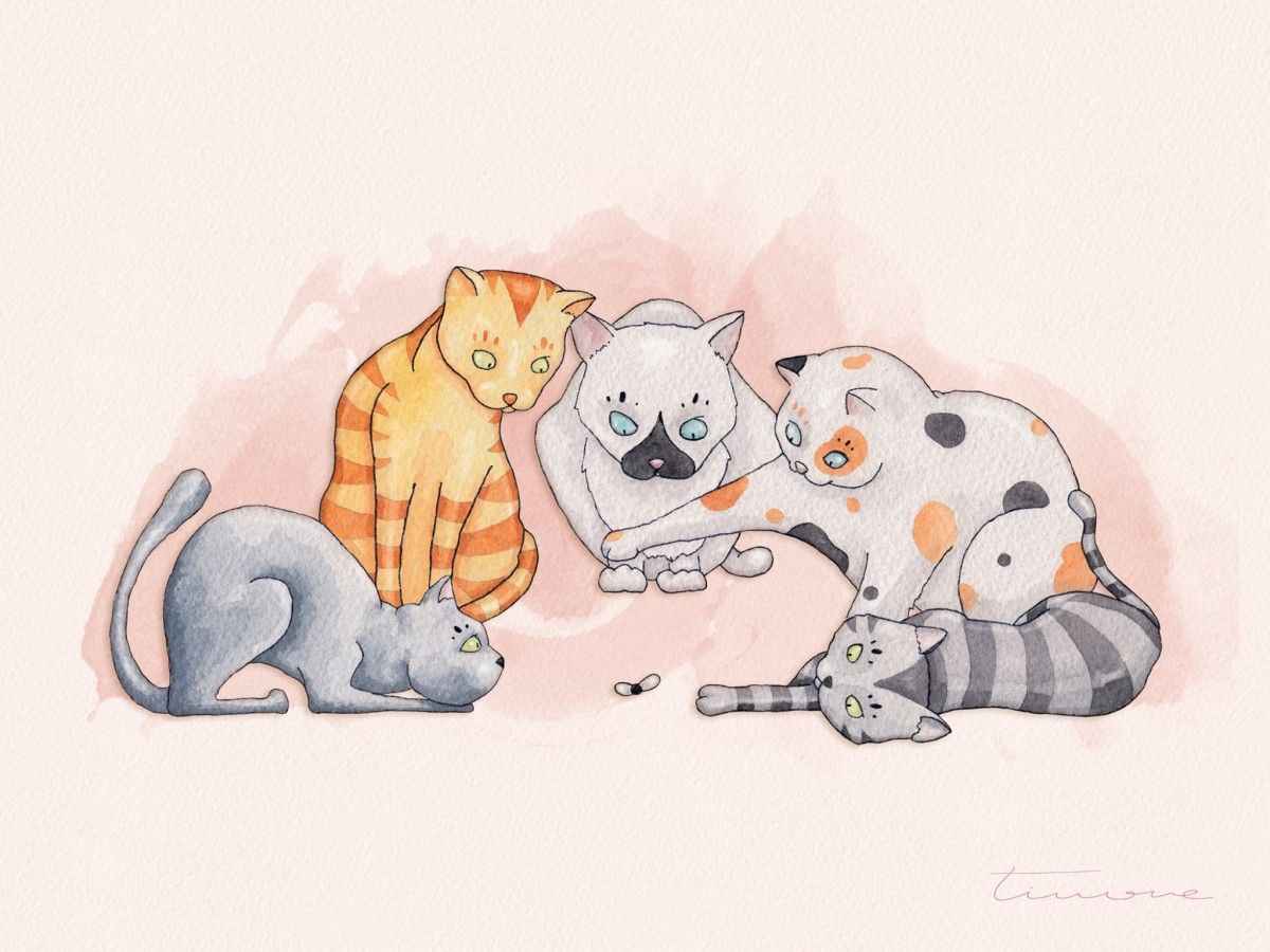 Cats playtime